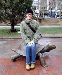 Copley Turtle Dec 2014